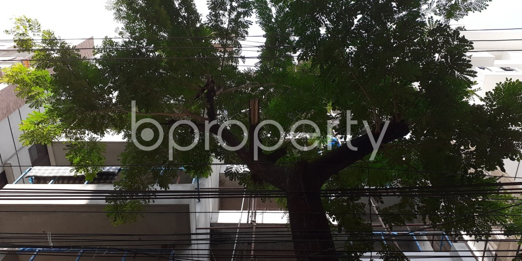Front view - 3 Bed Apartment for Sale in Bashundhara R-A, Dhaka - 1945987